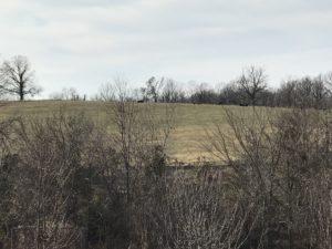 neighboring-hill