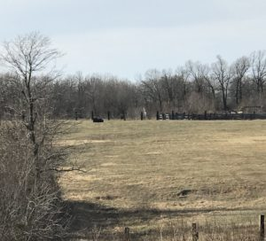 cows-on-hill